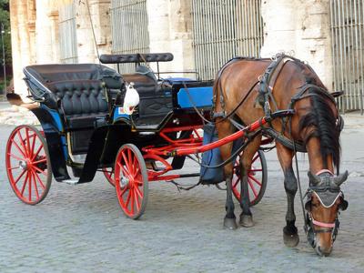 Pferd vor Kutsche