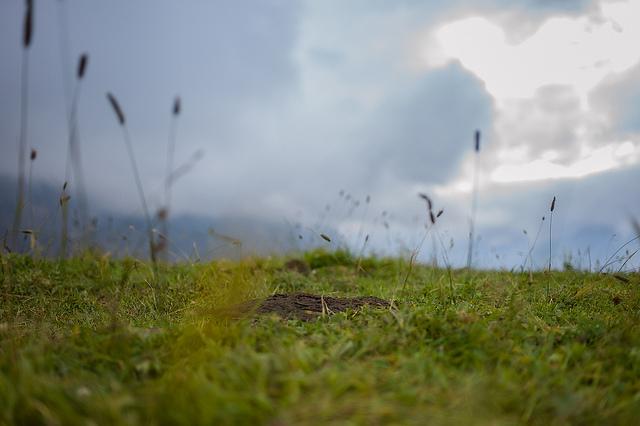Kuhfladen auf einer Alp